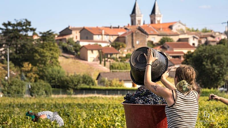 La découverte des vignobles du Beaujolais